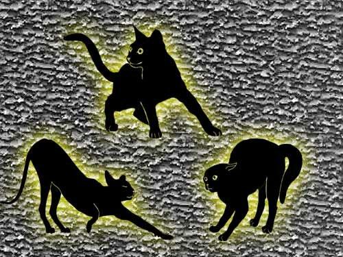 Верить ли в плохие приметы и суеверия? — Не верьте!