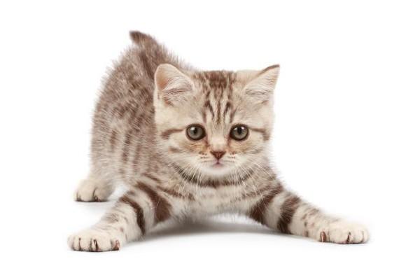 Появился котенок в доме. С чего начать? Что нужно котенку?